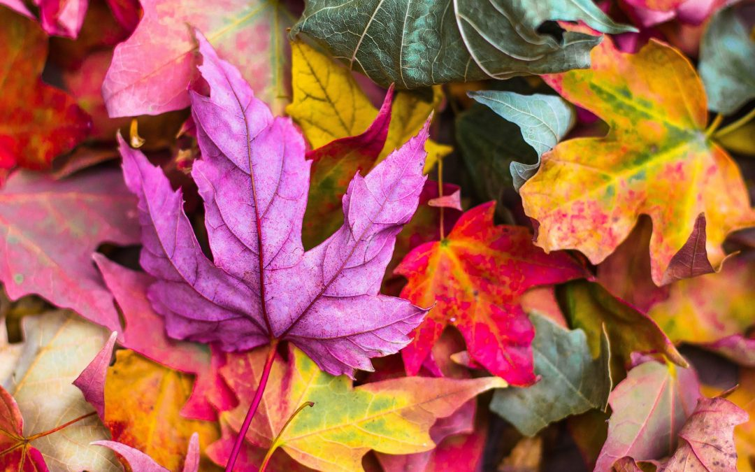 Top 5 Autumn garden ideas for Northamptonshire
